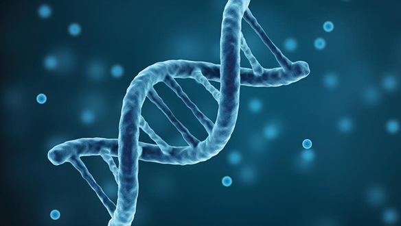 Sigorta primini gen haritası belirler mi? Sigorta sektöründe gen testi tartışması