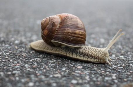 Yavaş hareket nedir? Hayatınızı nasıl değiştirebilir?